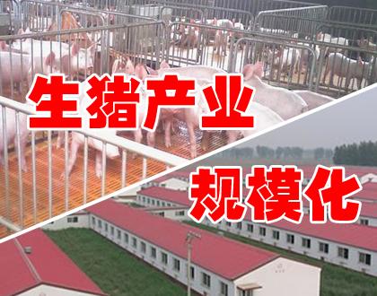 市场的呼唤:生猪产业规模化